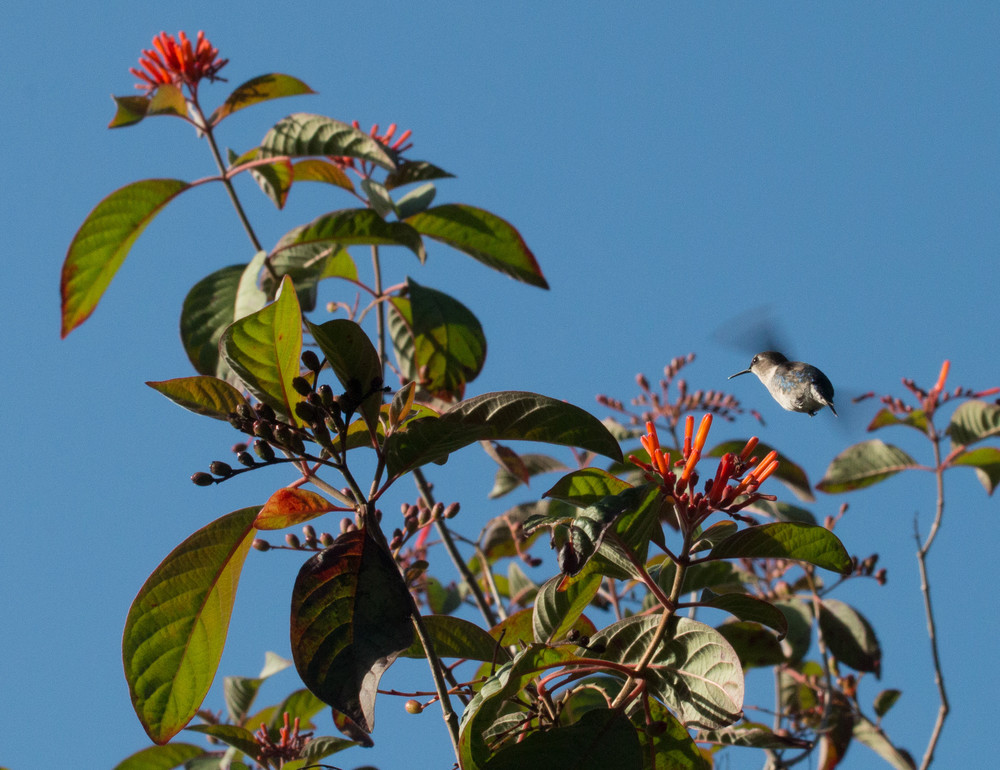 CUBA: Birds, Bath, and Beyond